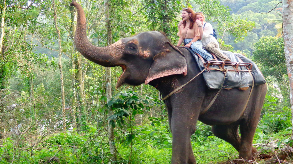 elephant-safari TKDY
